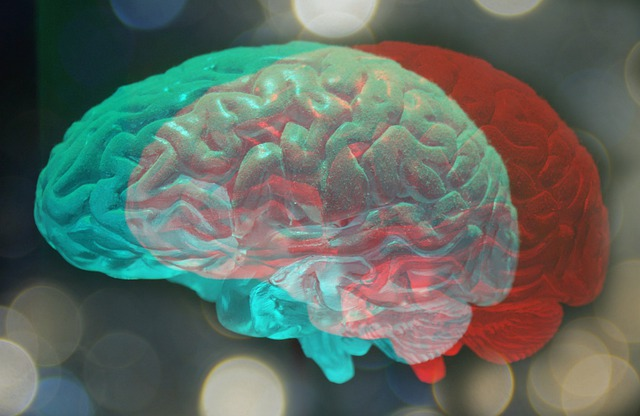 Neuromarketing, Sistema 1 y Sistema 2 en tu cerebro